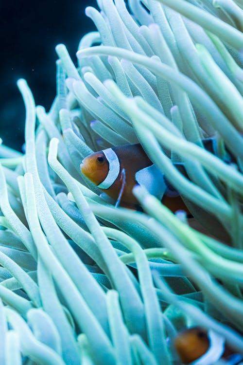 Clown Fish Hiding In Green Plant