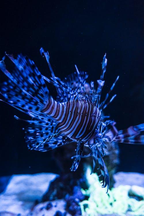 White and Black Striped Fish