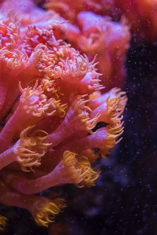 A Close-Up Shot of a Coral Underwater