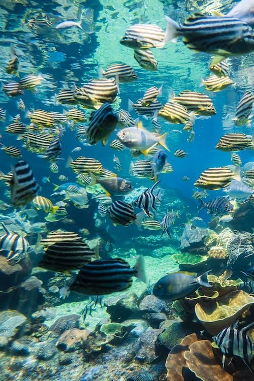 School of Fish in Fish Tank