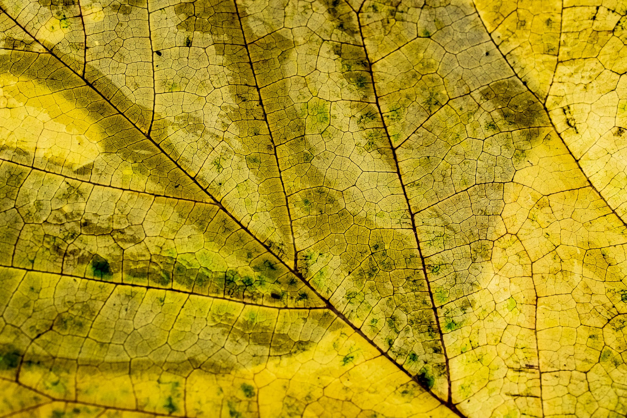 Close Up Photography of Dried Leaf