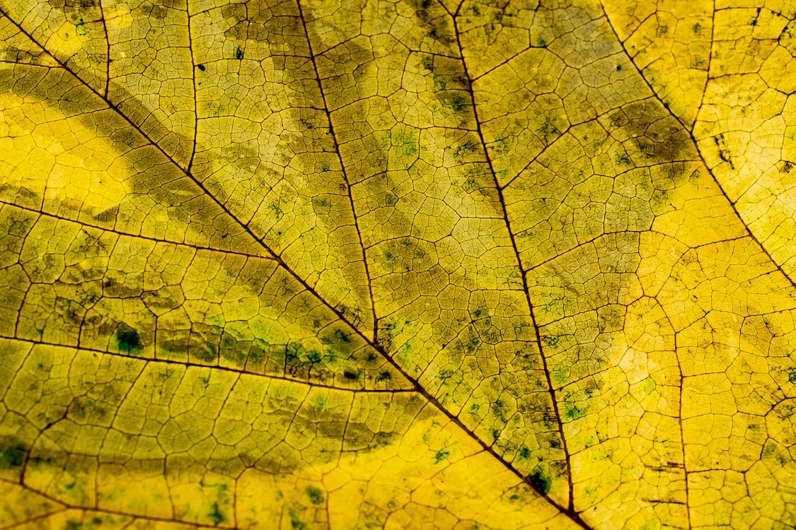 abstract, abstracte vormen, blad