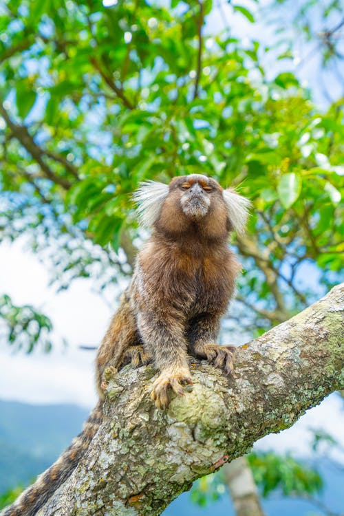 Brown Furry Monkey on Tree Branch