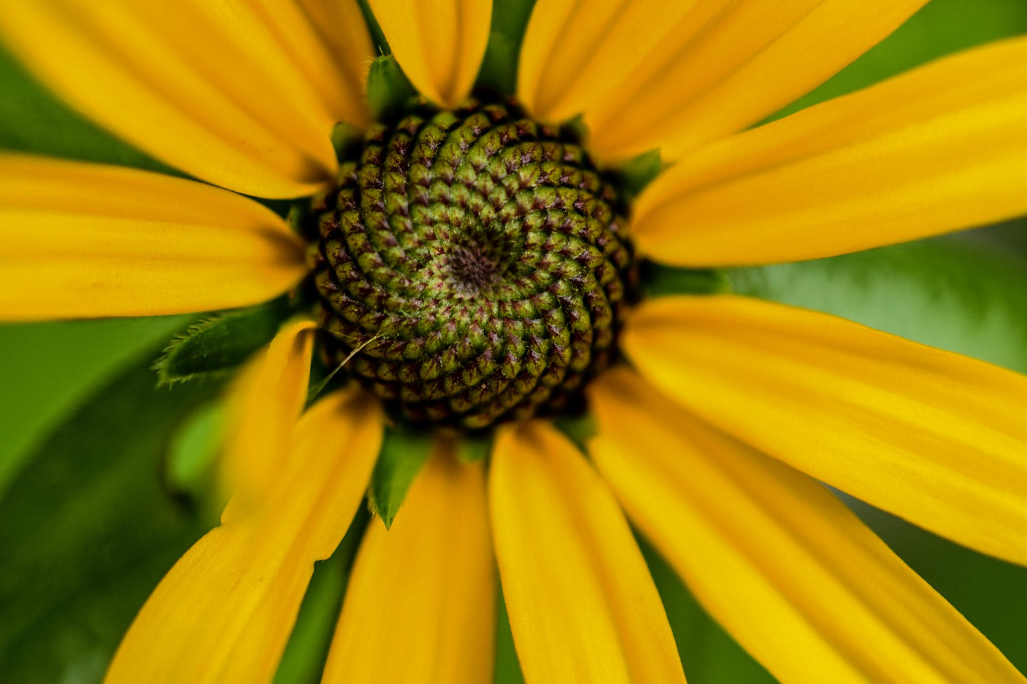 Close-up Photography of Yellow Daisy Flower