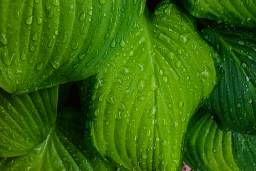Gratis lagerfoto af close-up, dug, grøn, regndråber