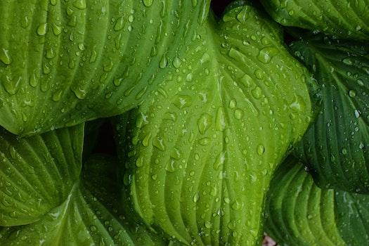 Free stock photo of leaf, leaves, dew, raindrops