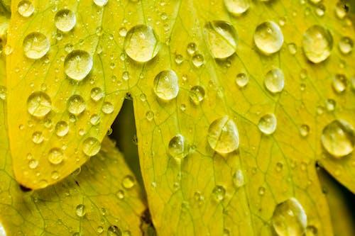 Základová fotografie zdarma na téma dešťové kapky, kapky vody, mokrý, příroda