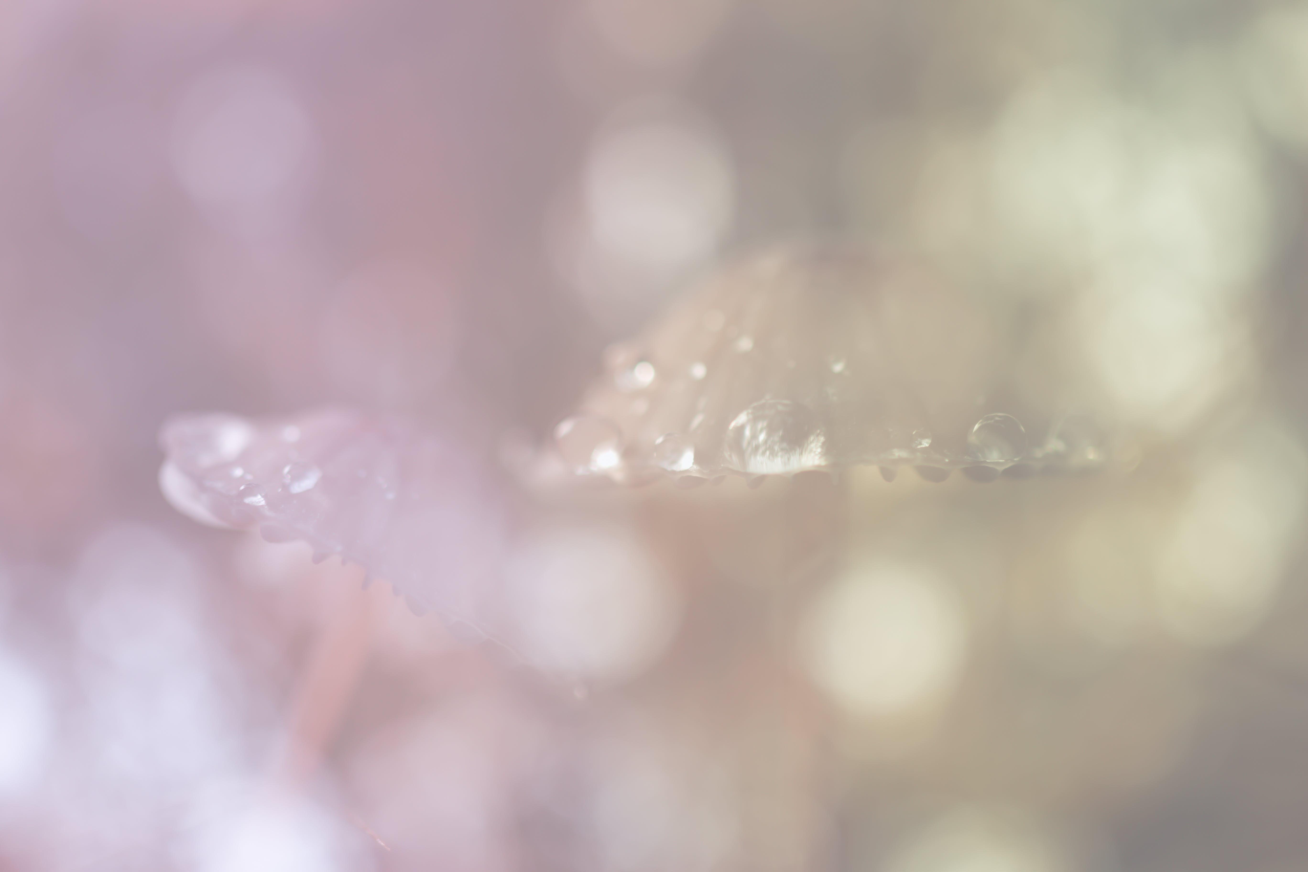 Kostenloses Stock Foto zu herbst, holz, hübsch, pilz