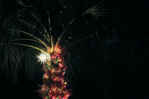 Free stock photo of christmas lights, christmas star, palm tree