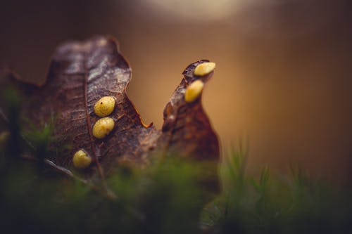 Безкоштовне стокове фото на тему «вродлива, дуб, залишити, зелений»