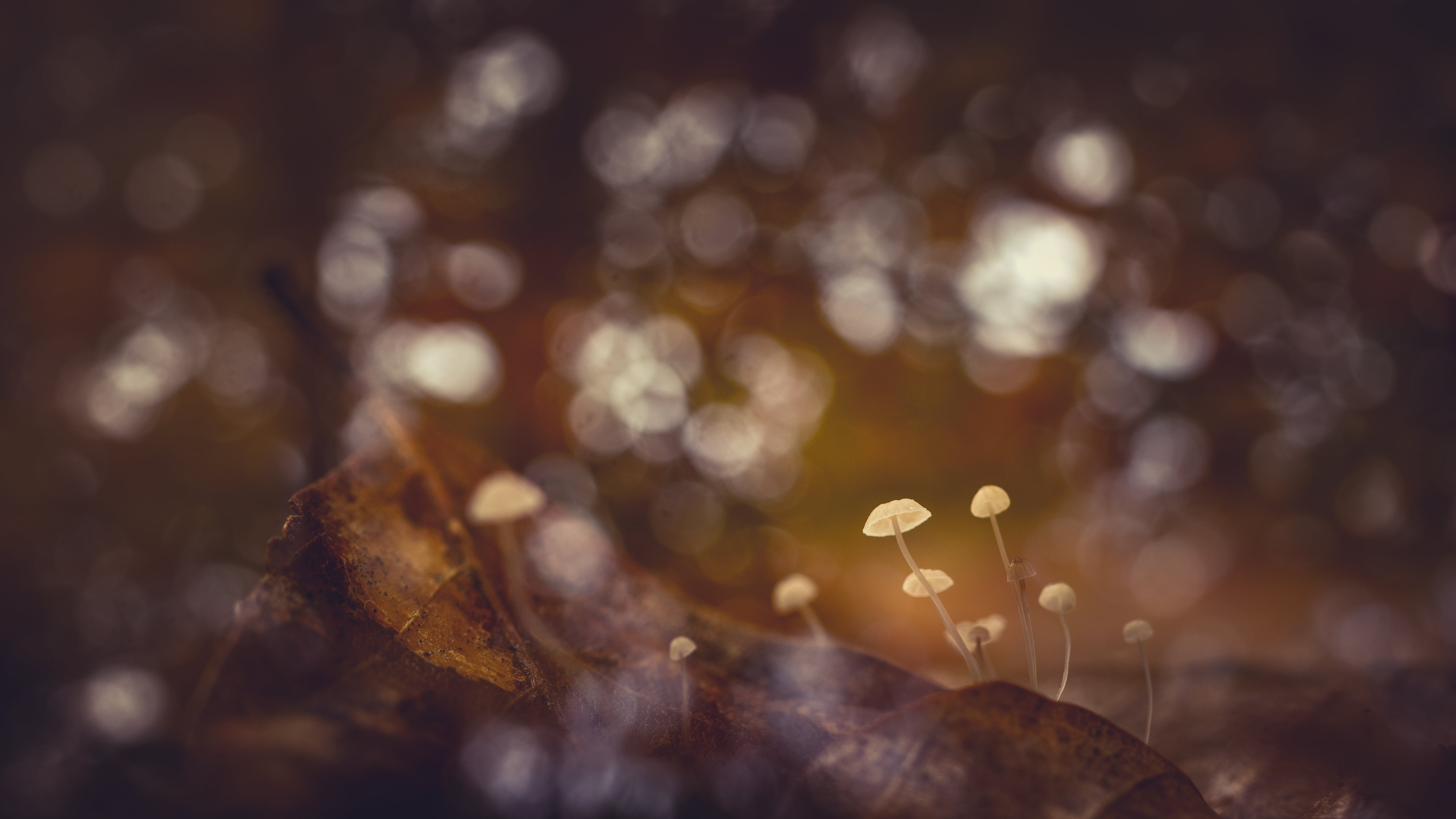 Closeup and Selective Focus Photography of Mushrooms
