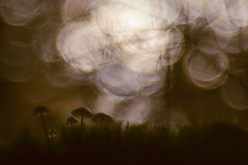 Безкоштовне стокове фото на тему «гриб, залишити, зелений, кола»