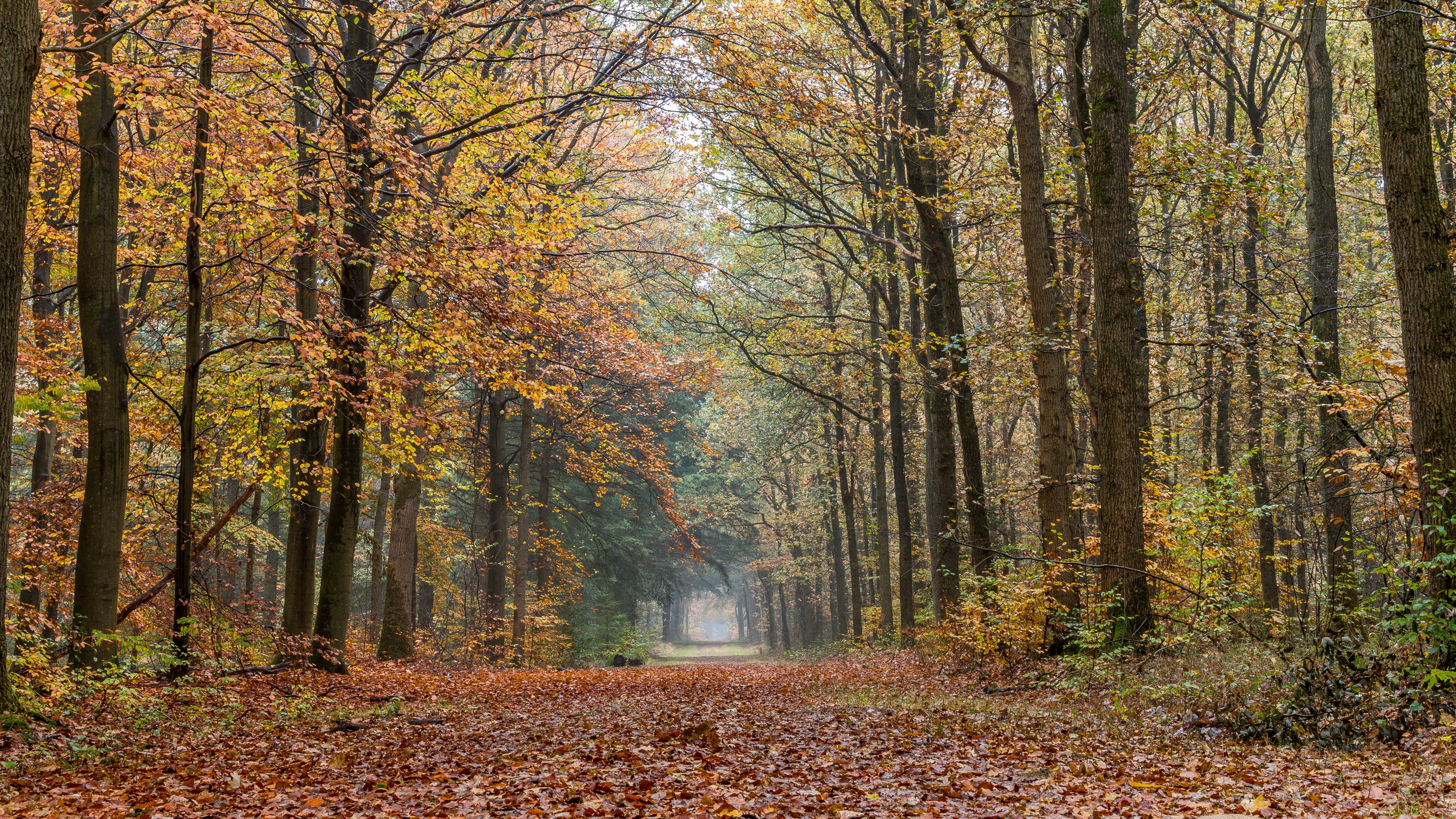 autumn, autumn leaves, branches