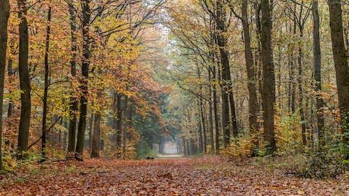 Безкоштовне стокове фото на тему «гілки, Денне світло, дерева, листя»