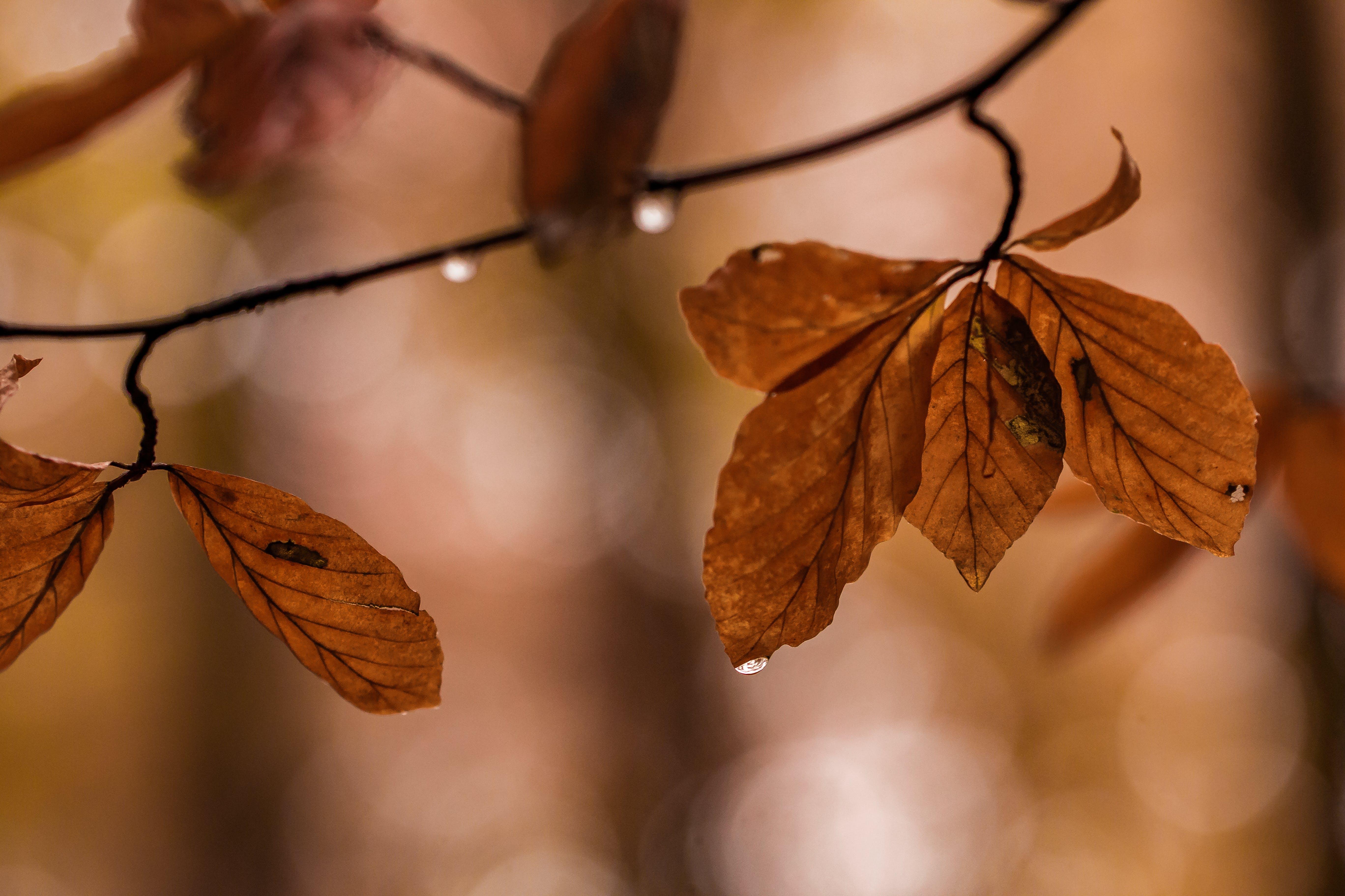 Brown Leaf on Shallow Focus Lens