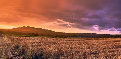 alan, bitki, buğday, bulutlar içeren Ücretsiz stok fotoğraf