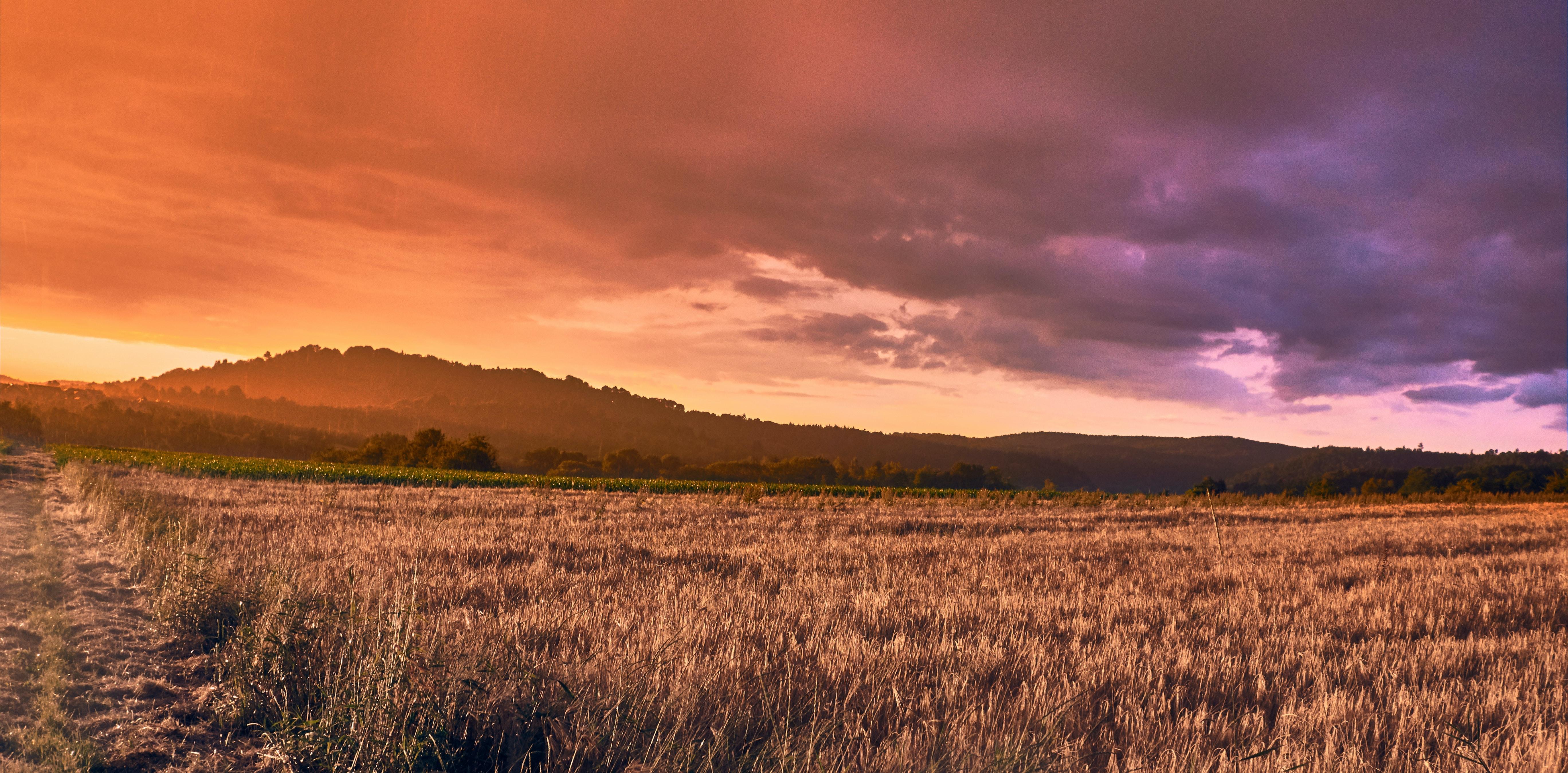 Sunrise on Green Grass Field · Free Stock Photo
