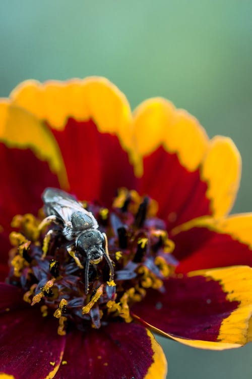 Black wasp on colorful flower