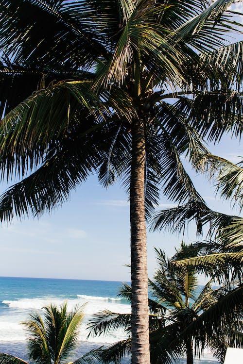 Fotos de stock gratuitas de exótico, idílico, Oceano