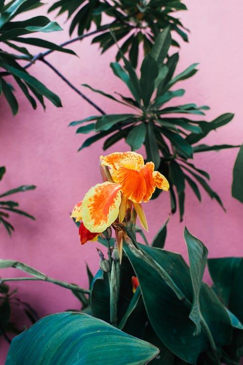 รูปภาพสิทธิ์แบบเหมาจ่าย ของ กลางแจ้ง, กลีบดอกไม้, การตกแต่ง, การเจริญเติบโต