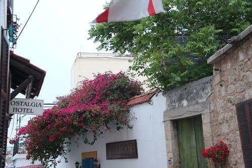 Gratis arkivbilde med blomstrer, gate