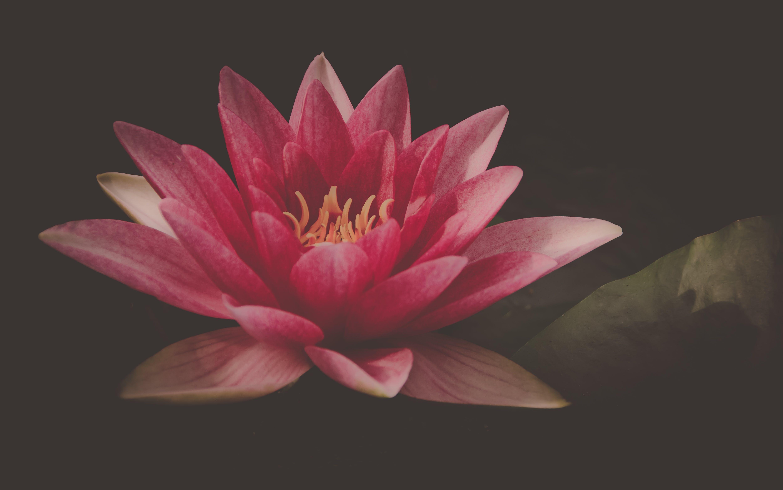 aquatic plant, beautiful, bloom