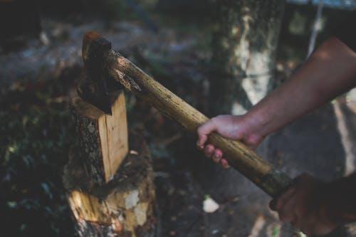 Foto profissional grátis de axe, floresta, madeira, madeira serrada