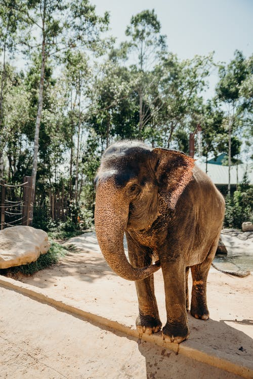 Gajah Coklat Berjalan Di Pasir Coklat
