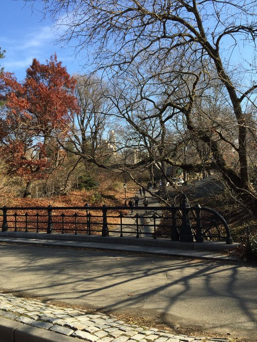 Free stock photo of central park, new york city, park
