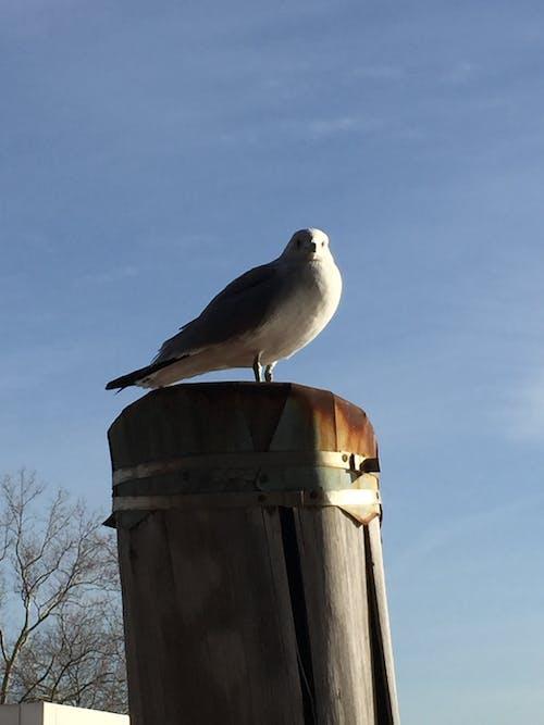 Free stock photo of hudson river, seagull, waterways