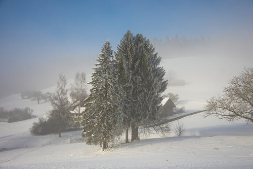 Green Tree on Snow Covered Ground