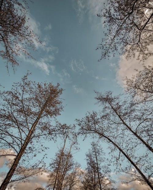Free stock photo of beautiful sky, beauty of nature, blue sky