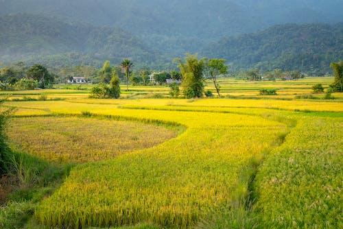 Immagine gratuita di abbondanza, agricoltura, agronomia