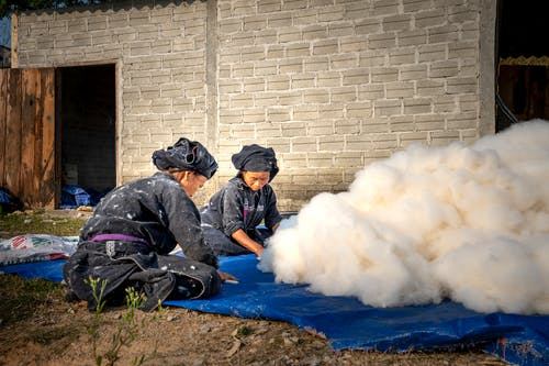 Full body focused hardworking Asian female farmworkers in dirty uniforms sorting collected cotton and sitting on ground in countryside