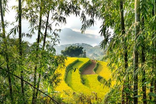 和平的, 國家, 園藝 的 免費圖庫相片