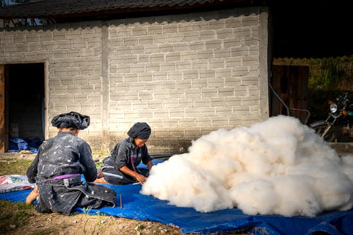 Full length Asian farmworkers cleaning and sorting collected cotton while sitting together on ground in countryside