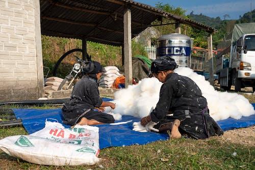 Foto stok gratis agrikultura, agronomi, asli
