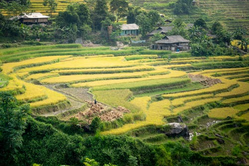 Picturesque rice field terraced and small houses in tropical countryside