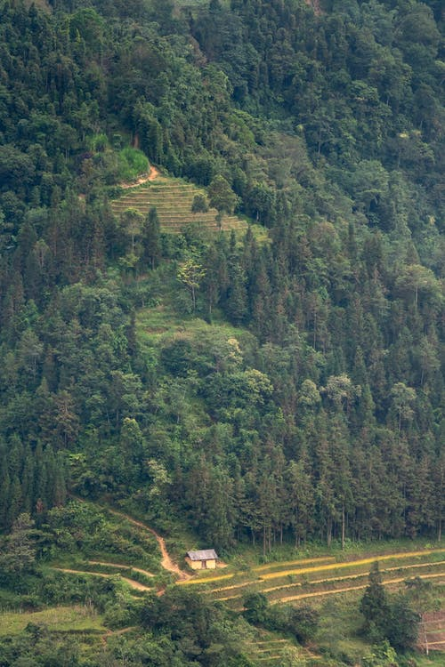 Picturesque landscape of grassy mountains with trees and rice plantations near small cottage in countryside