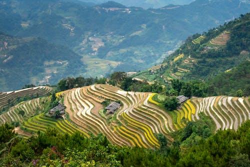 Immagine gratuita di agricoltura, albero, altopiano