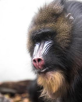 Free stock photo of animal, cute, zoo, monkey