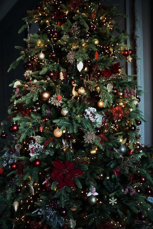 Gratis stockfoto met boom, conifeer, december, decoratie