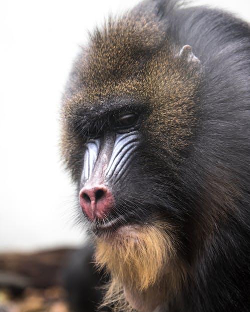 Gratis lagerfoto af abe, dyr, dyreportræt, natur
