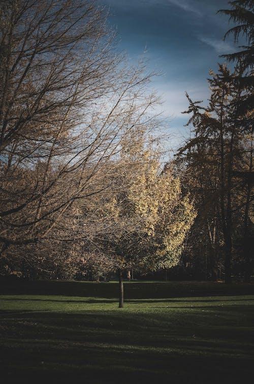 Photos gratuites de à couper le souffle, à feuilles caduques, à feuilles persistantes