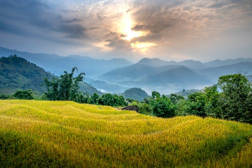 Picturesque landscape of grassy green mountains with trees in countryside under cloudy sky in summer day
