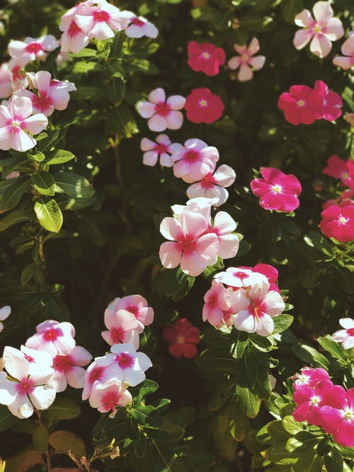 Free stock photo of beautiful flowers, bunch of flowers, bushes