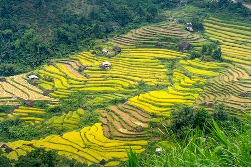土地, 地平線, 增長 的 免費圖庫相片
