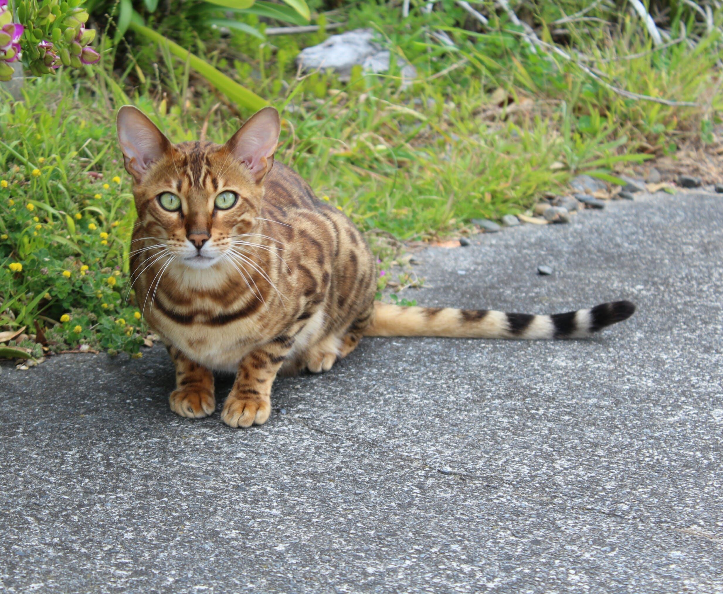 Free stock photo of animal, cat, kitten, nature