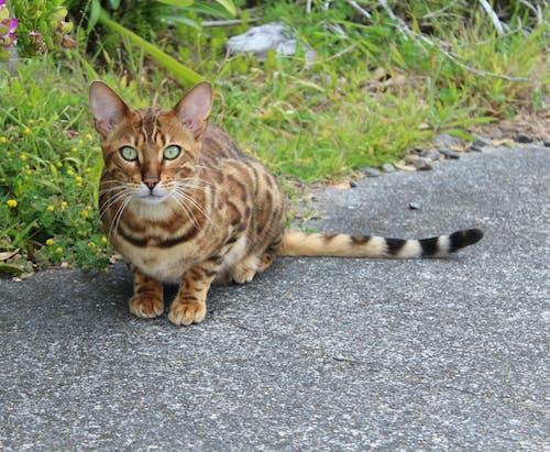 Free stock photo of animal, cat, kitten