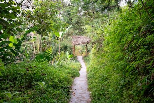 Tropical bushes near trees and path near arch